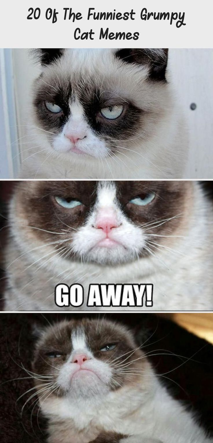 20 Of The Funniest Grumpy Cat Memes CATS 20 Of The