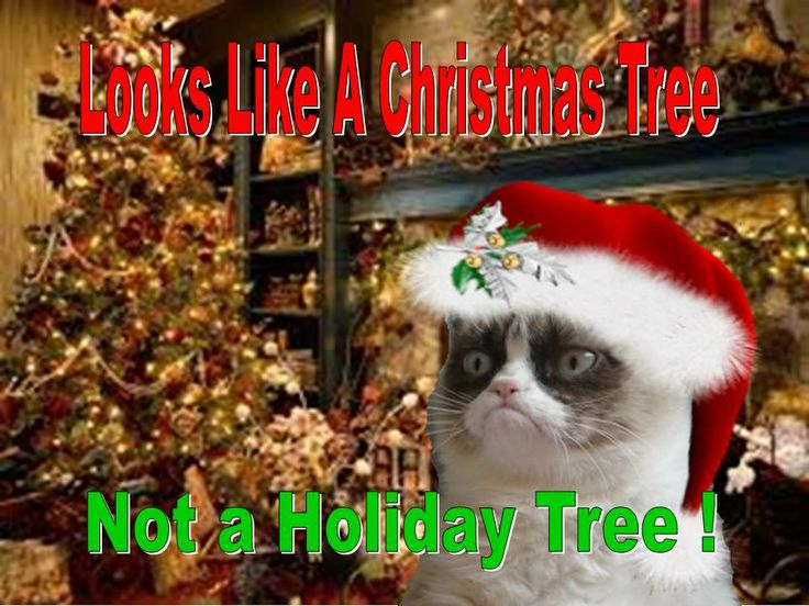 No Festivus here For more fun holiday cats, visit https://www.facebook.com/funholidaycats