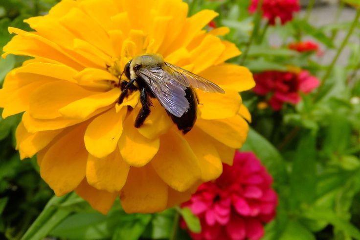 usy bee