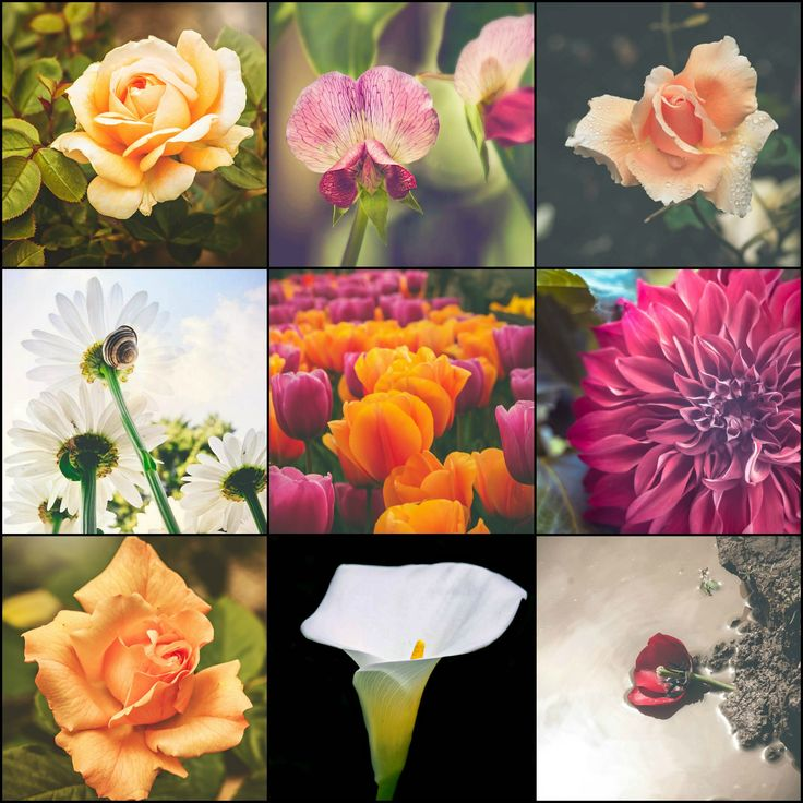 Fine Art High Resolution matted prints by EnchantedWindow on Etsy