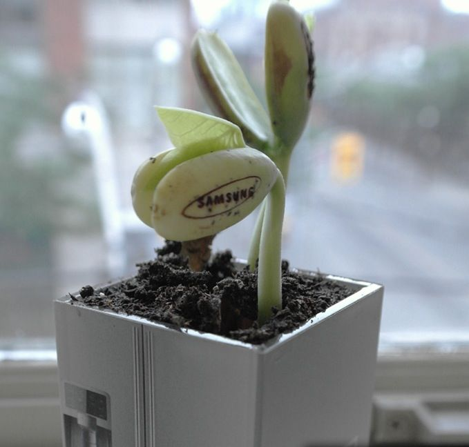 very cool direct mail piece from Cheil Canada/Samsung. The SamsungPlant (puntastic comments as well)