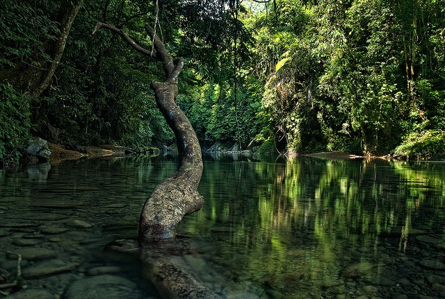 a river in Tangkahan, Gunung Leuser NationaL Park, Aceh, Indonesia