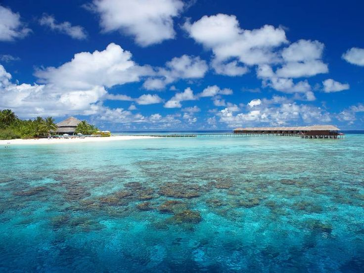 Das Hausriff des Filitheyo Island Resort ist einer der schönsten Schnorchelgründe der Malediven. Mehr Infos: http://www.itravel.de/Malediven/Filitheyo-Island-Resort/5960/