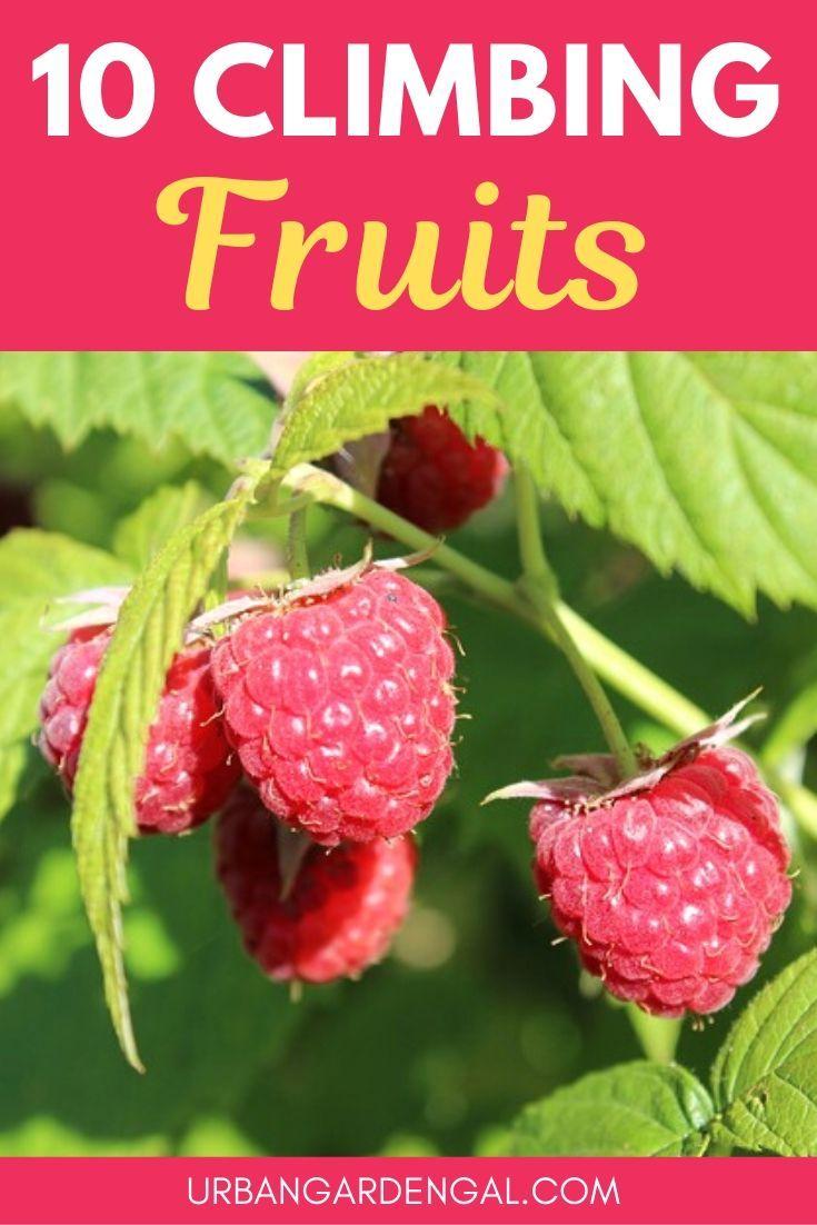 10 Climbing Fruit Plants In 2020 Vertical Garden Plants 400 x 300