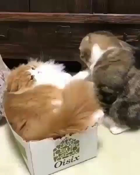 The late night box fight 🙀