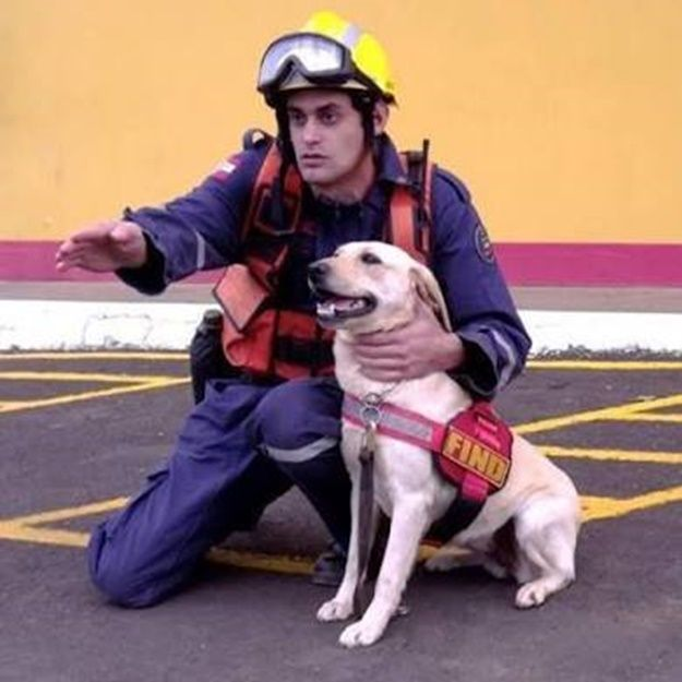 CONEXÃO BOMBEIRO : Cães de resgate
