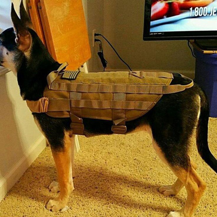 Veste tactique pour chien