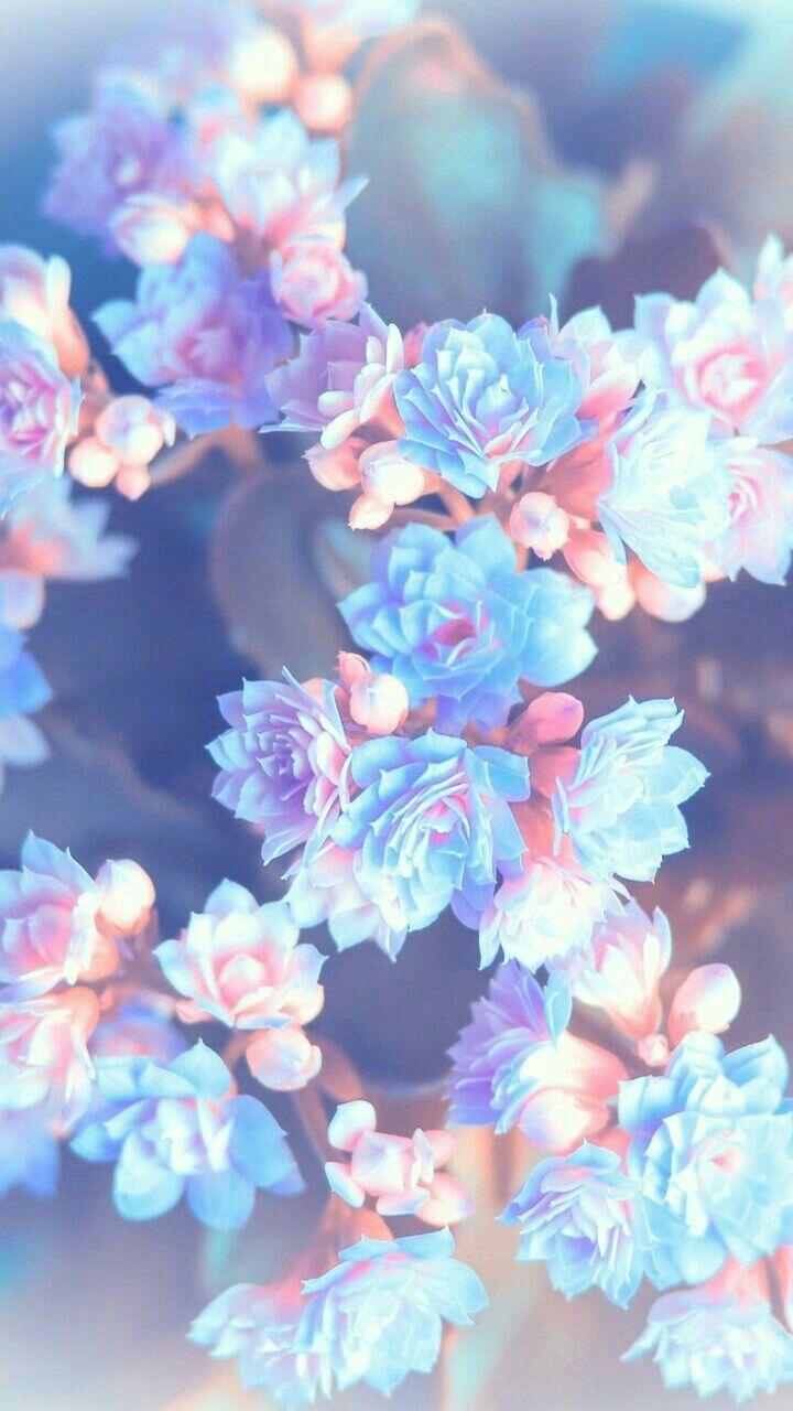 Fond d\u0027écran florale avec des couleurs pastel