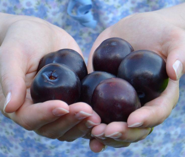 Zdrowie dzięki śliwkom: http://dailytips.pl/liwki-waciwoci-lecznicze-i-zdrowotne/