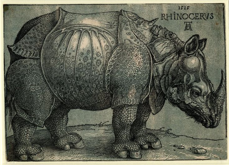 The Rhinoceros Albrecht Dürer (German, Nuremberg 1471–1528 Nuremberg) Date: 1515 Medium: Woodcut