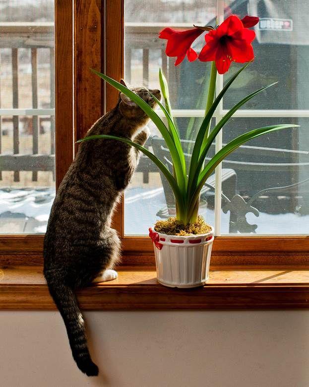 цветы ядовитые картинки домашние животные растет послушным