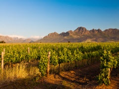 South Africas Western Cape Winelands