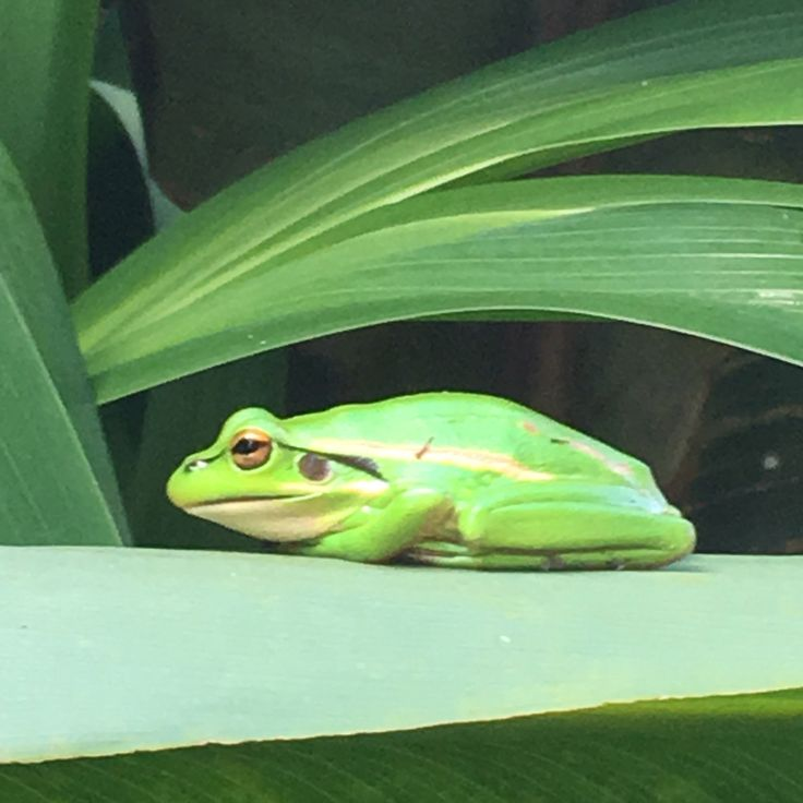 Frog in profile