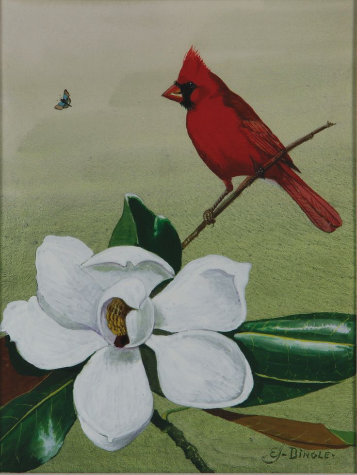 Dingle, Edward Von Siebold; Watercolor Painting, signed, Cardinal & Magnolia Blossom, 12 inch.