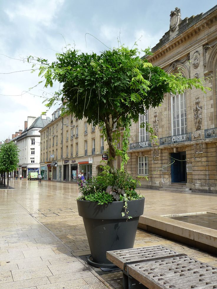glycine en arbre cultiv e dans un gros pot dans le centre ville d 39 amiens somme 15 juillet. Black Bedroom Furniture Sets. Home Design Ideas