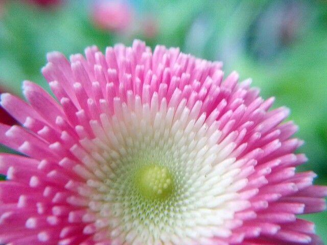 Pink and White Macro Shot