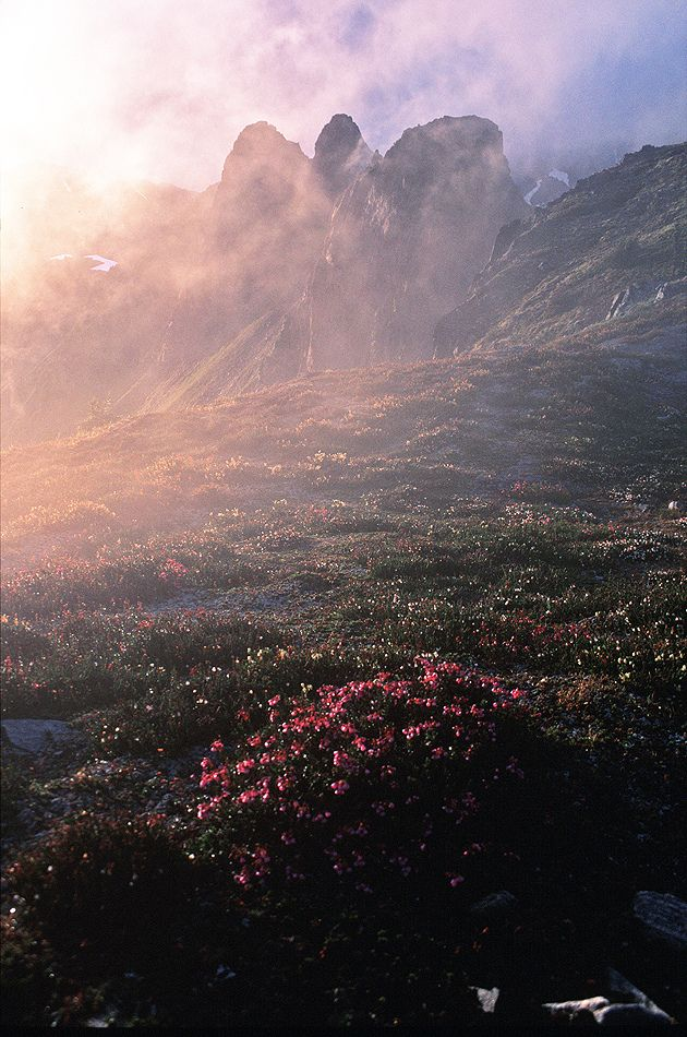 jjjjjjjjjjjjjjjjjjjjjjjjjjjjjjjjjjjjjjjjjjjjjjjjjjjjjj: Flowers Fields, Canada, Mists, Beautiful Places, Fields Of Dreams, Earth, Landscape, Natural, British Columbia