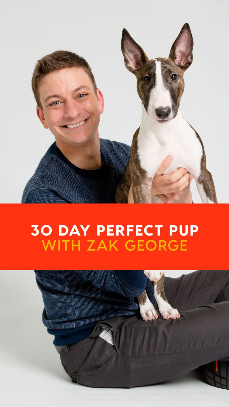 30 Day Perfect Pup with Zak Free Dog Training