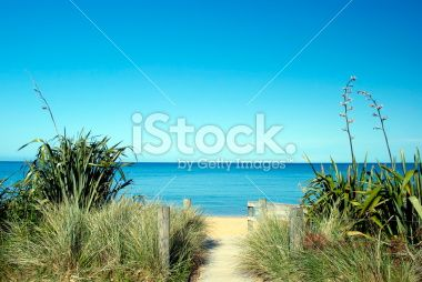 NZ Flax in bloom, Tussock, Sea and Sand Royalty Free Stock Photo