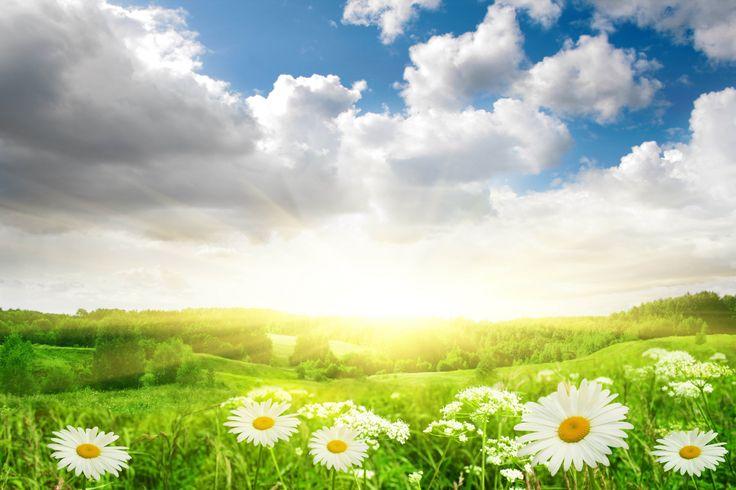 Скачать обои поле, небо, трава, солнце, облака, свет, пейзаж, цветы, природа, ромашки, раздел цветы в разрешении 7776x5184