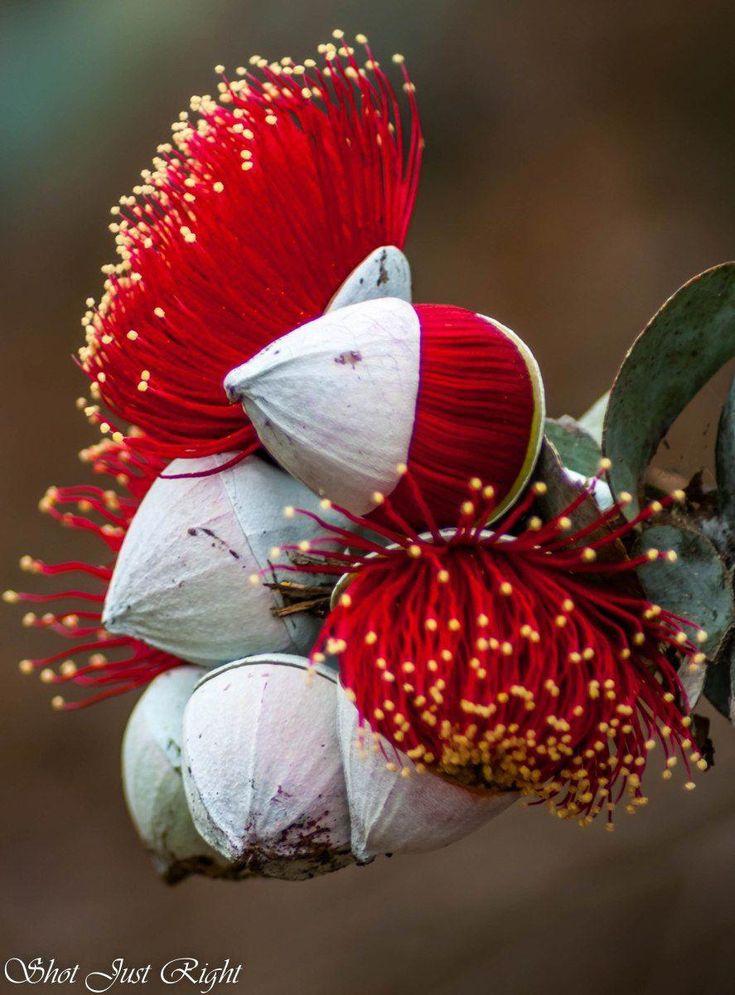 если необыкновенные цветы фото давно был россии