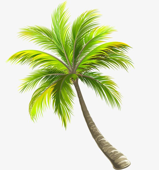 Green Coconut Tree Coqueiro Png
