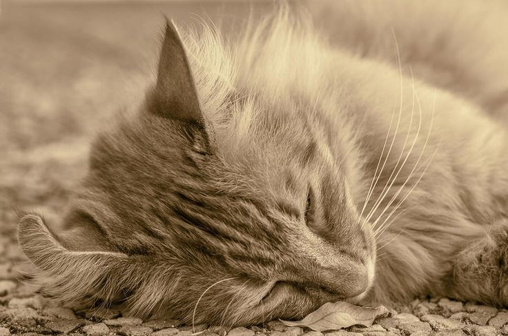 Do you like #cats? Get a print of this one. #Photography
