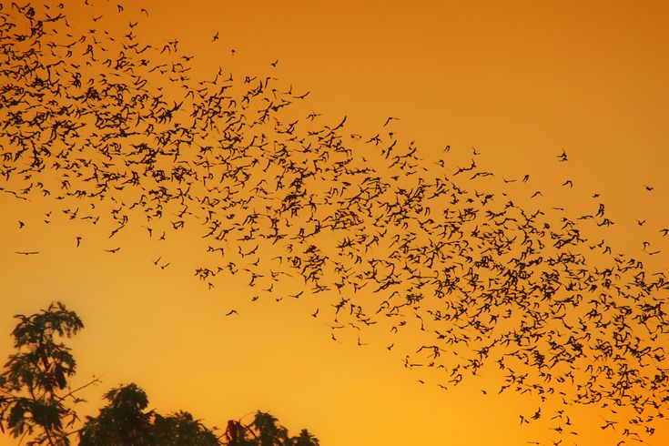 7 Fascinating Facts About Bats | Mother Jones --- bats are a vital part of the environment. If feel you're overrun by insects put up a bat house
