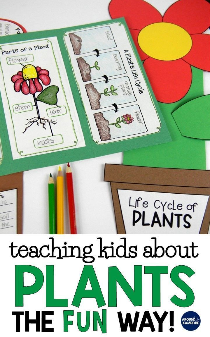 Plant Life Cycle Activities Fun Hands On Science For Kids Around The Kampfire Plant Activities Plants Life Cycle Activities Plant Life Cycle [ 1152 x 720 Pixel ]