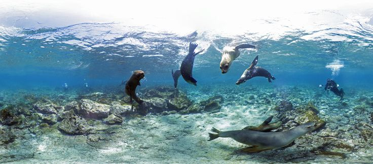 The reef is home to mammals as well. Kudos to Google Underwater Street View