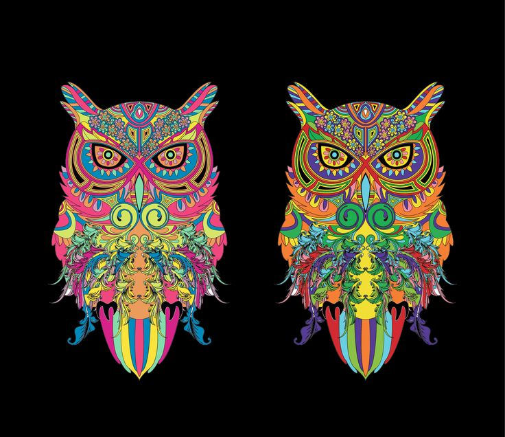 owls from animals an adult coloring book - Coloring Pages Coloring Book