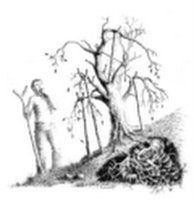 LOS 12 PRINCIPIOS, LEYES DE VIDA, DE LUZ, DE EVOLUCIÓN. | EternaCafe | Gran Sistema  8º El Principio de la acción comprendida.