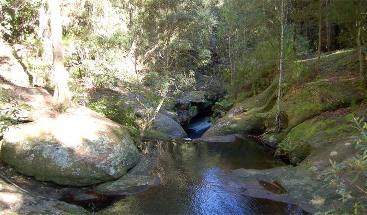 Circuit walking Track, Watagans National Park. Looks like a nice place to take the kids for a day. Close to Cessnock. It's an easy bushwalk and can also go swimming there :)
