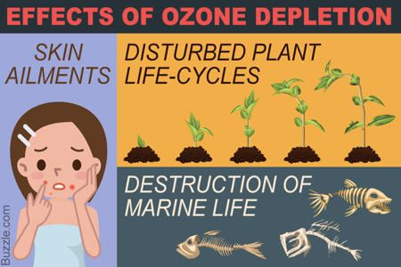 Effects of Ozone Depletion Skin ailments, Endangered amphibians, Destruction of marine life, Disturbed plant life-cycles