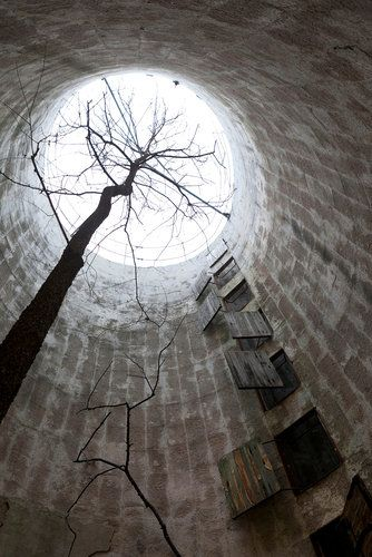 Trees take root and finally peek out of the tops of  empty silos, like this one in Lawrence, Kansas.....