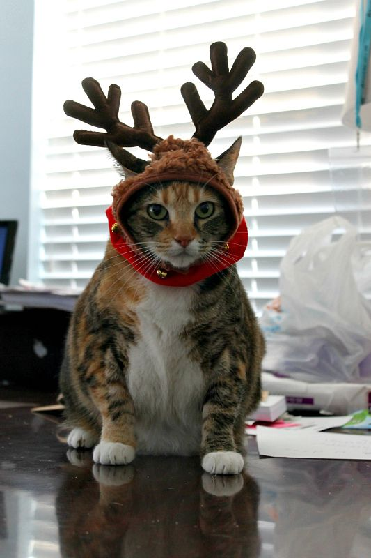 Now, Dasher, now, Dancer! Now, Prancer and Mittens!