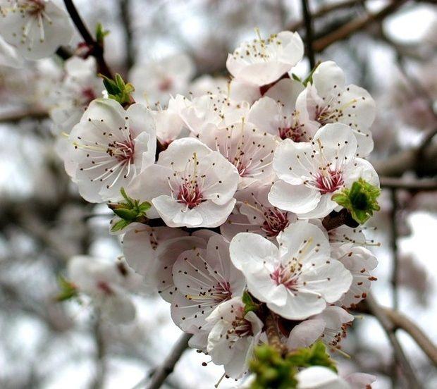 Flori de cais sursa foto: trilulilu.ro
