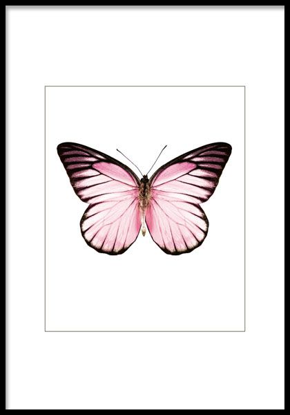 Affisch med rosa fjäril, snygg som del i ett kollage.