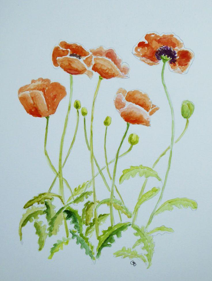 Cecelia's Poppies; watercolour by Gorica Bulcock