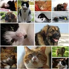 NATUUR: Digischool.nl - Dieren: Allerlei info en leuke filmpjes over vogels, vissen, insecten, huisdieren, bosdieren, boerderijdieren, savanne, jungle, sloot en plas...