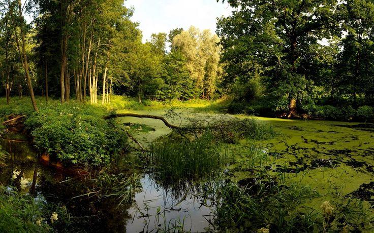 beautiful-forest-lake-wetland-hd-desktop-wallpaper.jpg (1920×1200)