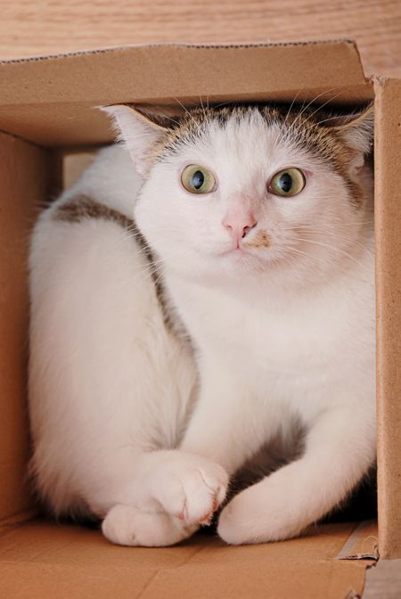 cat in a box: Cats, Fit, Animals, Kitten, Boxes, Kitty Kitty, Feline