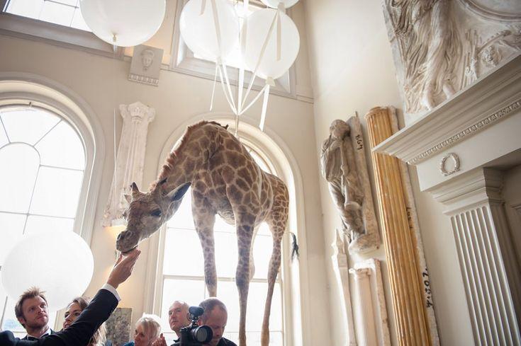 giraffe at aynhoe park wedding