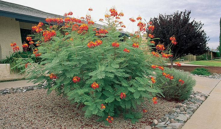 Low Water And Drought Tolerant Plants Botanical Name