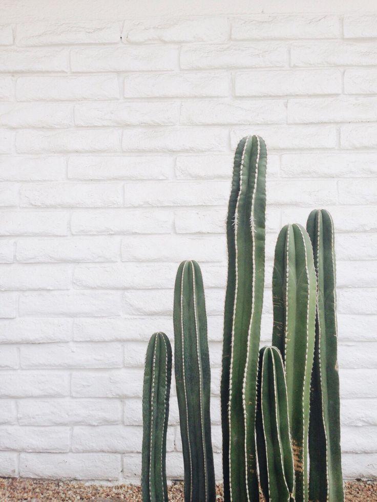 https://s-media-cache-ak0.pinimg.com/736x/ae/ca/5c/aeca5c62f5d743fbf276b1f73f5d3956--minimalist-garden-photo-style.jpg