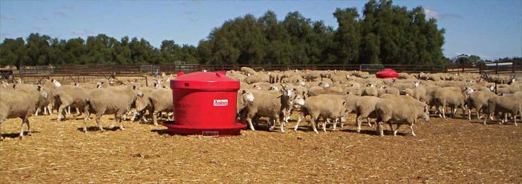 Anipro for sheep | Kober Agricultural Intelligence
