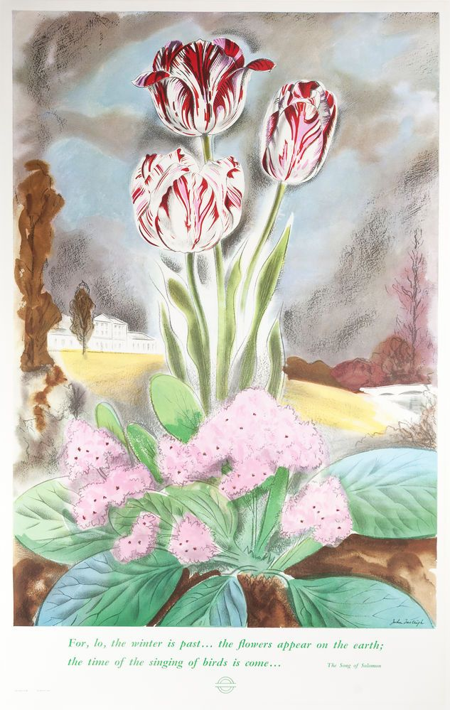 The Song of Solomon. Tulips Vintage Poster.