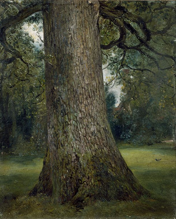 John Constable, Study of the Trunk of an Elm Tree, c.1824. Oil on paper.
