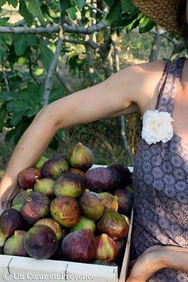 I love Fig preserves!