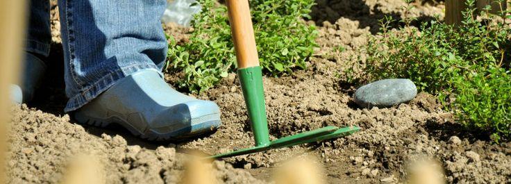 27 best orto verdure frutti e ortaggi images on - Pulizia casa dopo lavori ...